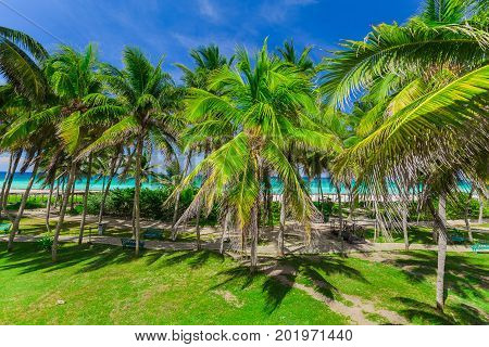 great amazing inviting view of tropical palm garden leading to the beach and tranquil turquoise ocean on blue sky background at Cayo Coco Cuban island, sunny summer beautiful day