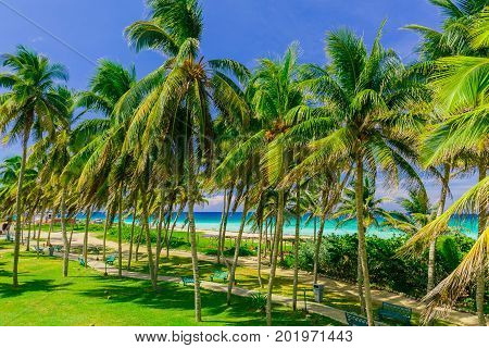 beautiful inviting nice tropical palm tree garden with turquoise tranquil ocean in background