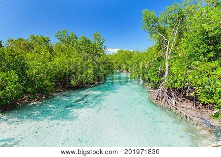 nice inviting view of natural turquoise ocean river flowing in tropical garden at Cuban Cayo Coco island