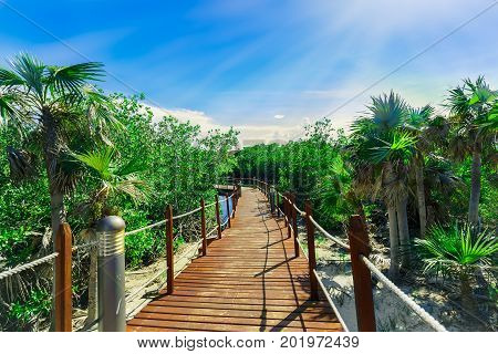great amazing inviting view of wooden bridge in tropical garden leading to the beach and ocean ocean on blue sky background at Cayo Coco Cuban island, sunny summer beautiful day