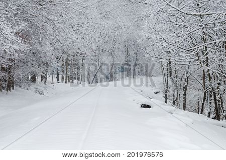 A railroad track and trees covered with fresh snow
