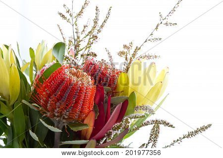 Bouquet Of Australian Native Flowers Against White Background