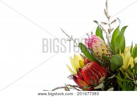 Bunch Of Australian Native Flowers Against White Background With Copy Space
