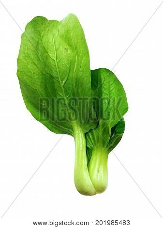 Shanghai Bok Choy isolated on white background. food. spices