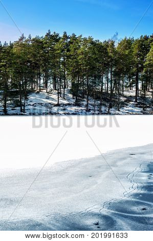 Winter/spring forest with ornate on frozen lake/river surface. Outdoors.