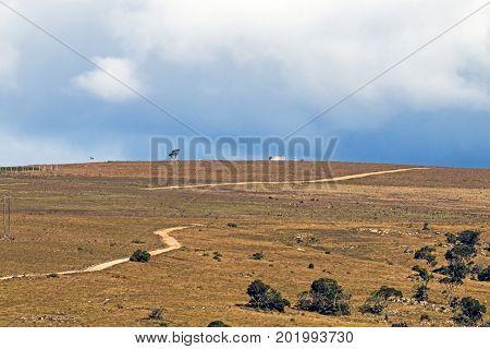Rural Dry Winter Vegetation  Blue Cloudy Sky Wilderness Landscape