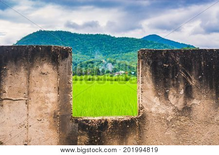 Magnificent Scenery Of Green Rice Field In Countryside Of Thailand.