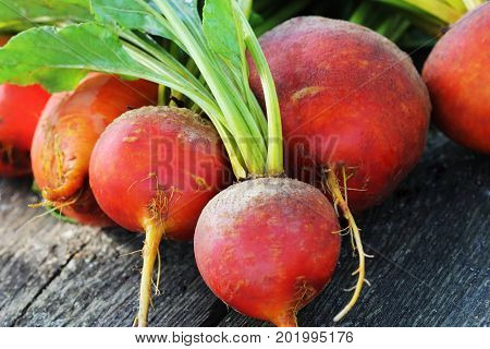 Raw organic golden beets on wooden background .