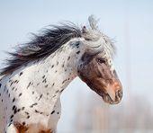 Portrait of pony appaluza poster