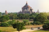 The tourist on the way in the plain of Bagan(Pagan) at sunrise Bagan Myanmar poster
