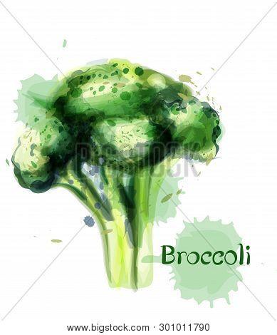 Brocoli Icon Vector Watercolor. Delicious Green Vegetable Templates
