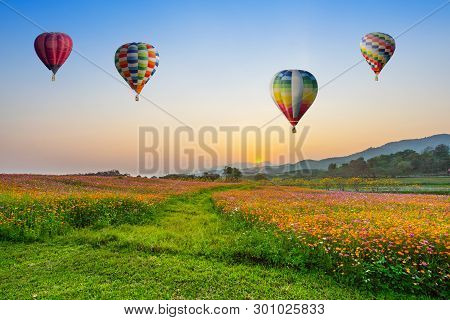 Hot Air Balloon Flying Over Cosmos Flowers Fields On Sunset At Chiang Rai, Thailand.