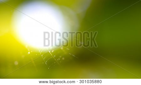 Spiderweb in the Sunny Morning Forest. Close up Photo of Cobweb