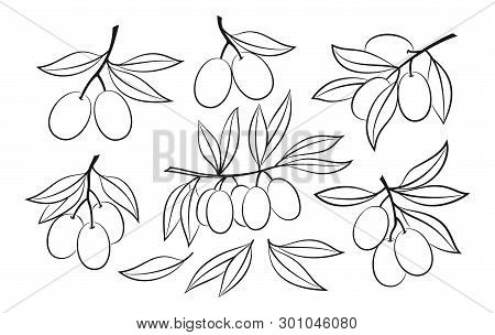 Set Of Olive Branches And Leaves, Black Pictograms Isolated On White. Vector