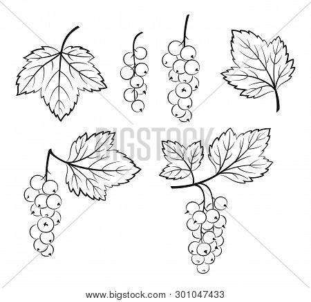 Set Of Currant, Berries And Leaves, Black Pictograms Isolated On White. Vector