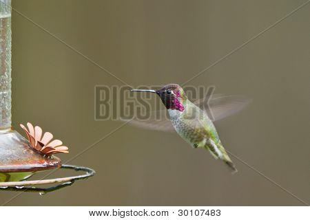 Hummingbird and feeder.