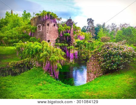 Wisteria Flowers In Enchanted Garden Of Ninfa In Italy - Medieval Tower Ruin Surrounded By River .