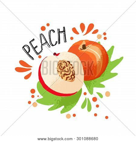 Vector Hand Draw Colored Peach Illustration. Orange Peach With Pulp And Fruit Bone And Green Leaves.