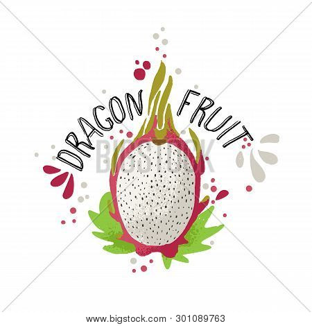 Vector Hand Draw Colored Dragon Fruit Illustration. White And Red Dragonfruit With Pulp And Fruit Bo
