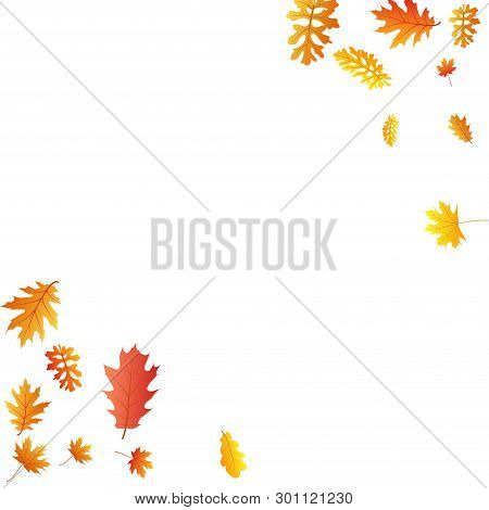 Oak, Maple, Wild Ash Rowan Leaves Vector, Autumn Foliage On White Background. Red Orange Gold Sorb D