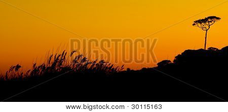 Beach Grasses at Sunset