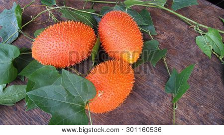 Baby Jackfruit has the scientific name Momordica cochinchinensis (Lour) Spreng. Fruit with lycopene,