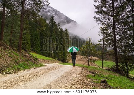 Girl Walking Through Forest On A Rainy Day. Rocky Road In Forest Nature. Green Forest Road. Nature.