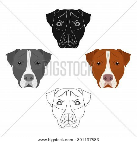 Dog Breed, Stafford.muzzle Of Stafford Single Icon In Cartoon, Black Style Vector Symbol Stock Illus
