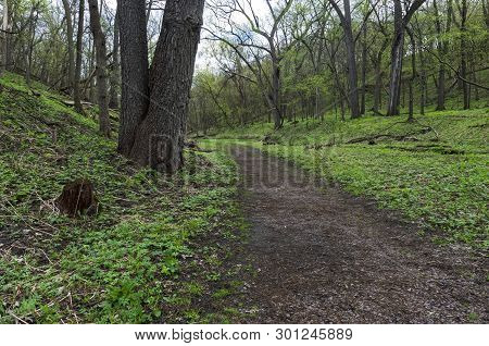 Trail Through Wooded Valley Of Flandrau State Park In New Ulm Minnesota
