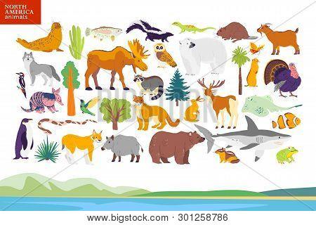 Vector Flat Illustration Of North America Landscape, Animals, Plants: Seal, Bear, Moose, Owl, Deer,