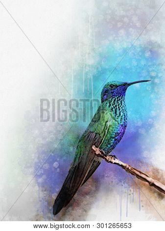 Humming Bird, Exotic Birds On Vintage Background, Watercolor Illustration