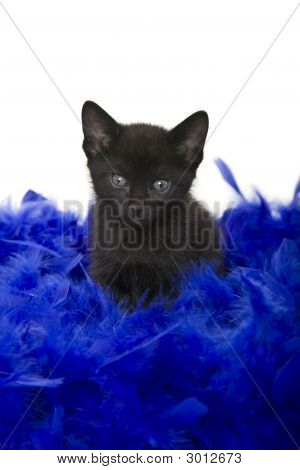 Fuzzy black kitten sitting in a blue boa. 5 weeks old. poster