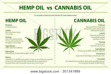 Hemp Oil vs Cannabis Oil horizontal infographic illustration about cannabis as herbal alternative medicine and chemical therapy, healthcare and medical science vector.