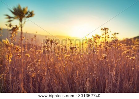Wild meadow in mountains at sunset. Beautiful natural background.