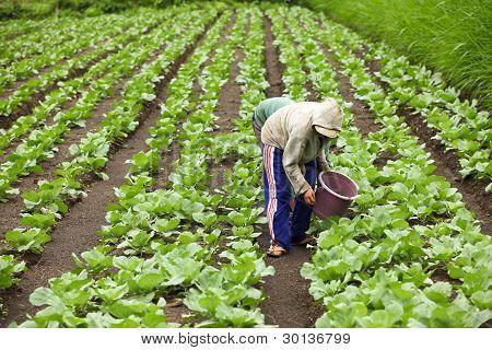 Bauern ernten