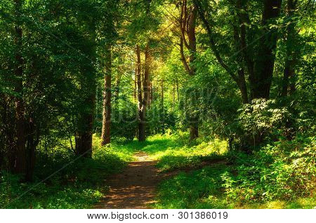 Forest summer landscape in sunny weather - forest trees and narrow path lit by soft sunlight. Forest summer nature in sunny day, diffusion filter applied