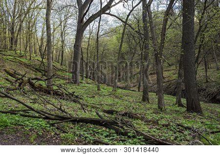 Woodlands Hills And Ravine Of Flandrau State Park In New Ulm Minnesota