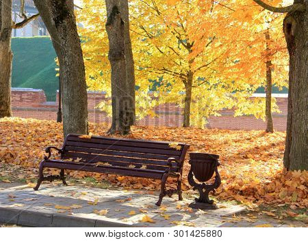 Trees with fall foliage on country park and bench