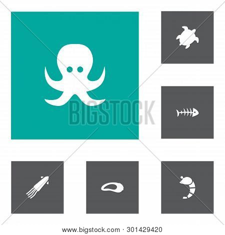 Set Of 6 Food Icons Set. Collection Of Bone, Turtle, Oyster And Other Elements.