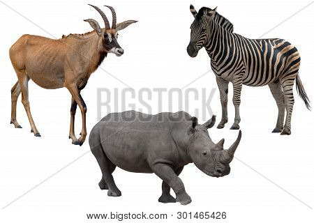 Three African Wild Animals - Antelope,zebra And Rhinoceros ,isolated On White