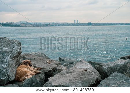 Stray dog with brown laying down and feeling sad and lonely on the bosporus on a cloudy day poster