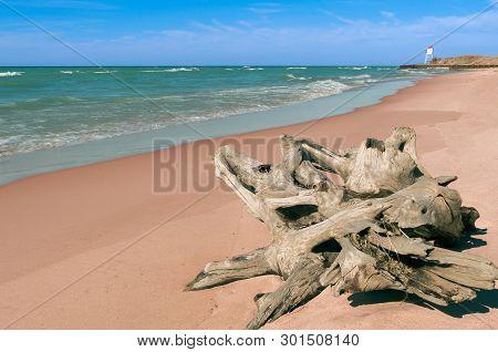 Driftwood On The Beach Near Big Sable Point Lighthouse