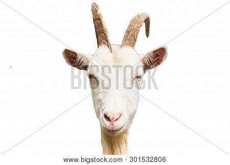 Goat Head Isolated On White Background For Any Purpose