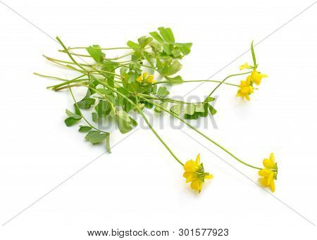 Yellow coronilla flowers. Isolated on white background poster