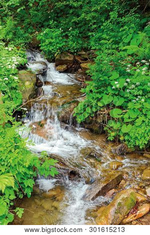 Wild Stream Winds Its Path Through Forest Shade. Beautiful Summer Nature Scenery In The Remote Woods