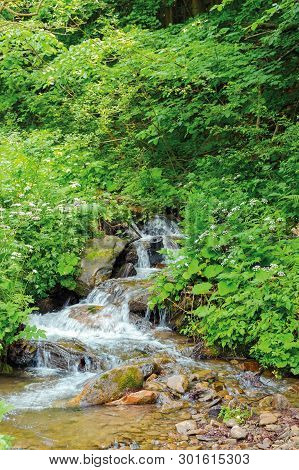 Wild Stream In The Forest Shade. Beautiful Summer Nature Scenery In The Remote Woods. Rocky Bottom O