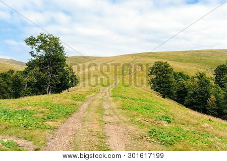 Primeval Beech Forests Of Carpathian Mountains. Beautiful Late Summer Landscape In Afternoon. Countr