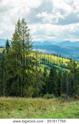 Cloudy September Countryside In Mountains. Beautiful Nature Background. Spruce Forest On An Overcast