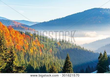 Wonderful Autumn Sunrise In Mountains. Fog Floating In The Distant Valley. Hills With Spruce And Bee