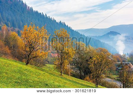 Orchard On A Grassy Hill In The Rural Valley. Trees In Golden Foliage. Distant Forest In Fog. Villag